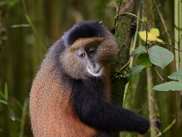 Rwanda4.jpg